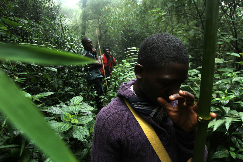 "[From left] Abdul Nasir, Ngeh Francis, & Hamza, searching for the ""King of the Forest"", Bannerman's Turaco (Tauraco bannermani)<br /> <br /> Oku, Cameroon"
