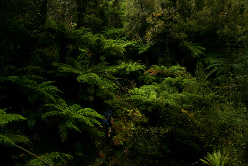 Benni Leutner, deep in the bush<br /> <br /> Raikura (Stewart Island), New Zealand