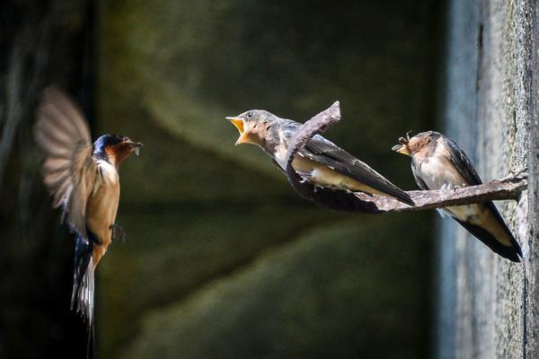 Mother bird feeding the children.