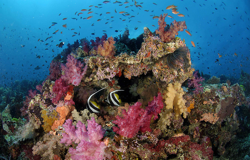 Coral Reef, Taveuni, Fiji