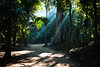 Sun Rays in the Jungle