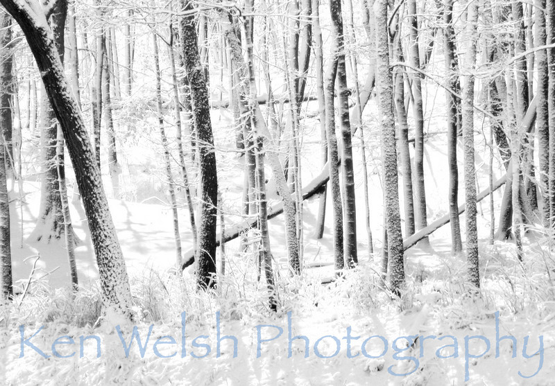 """Snowstorm""<br /> <br /> © Copyright Ken Welsh edit"