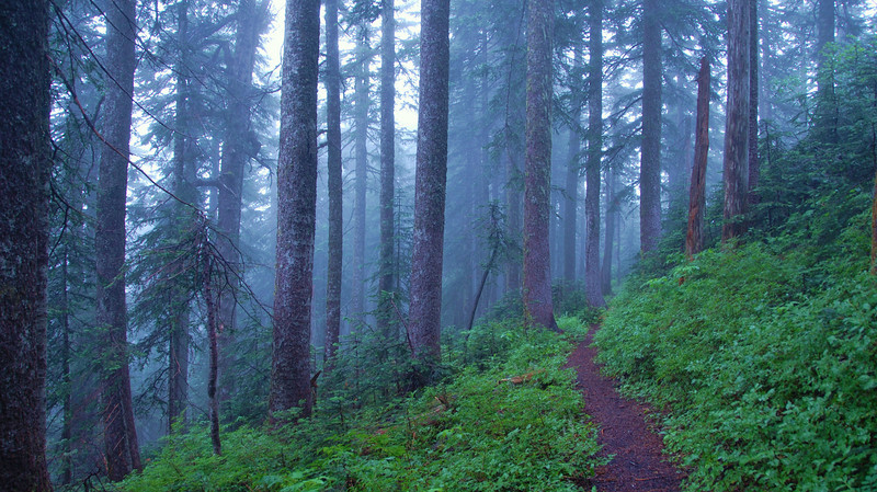 Foggy forest, Silver Star trail SW Washington