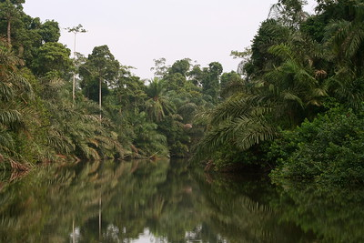 Mpivie River, Gabon