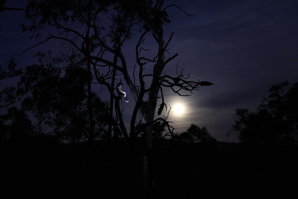 Simon Cherriman checks on a wedgie (Aquila audax) aerie<br /> <br /> Western Australia, 2010