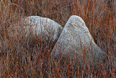 Still life of boulders and reeds, Cape Anne, Massachusetts