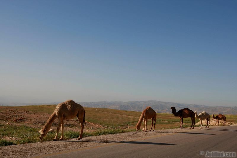 couleur jordanie bas coté 35