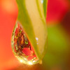 waterdrop_reflection