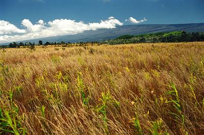 On the Slopes of Mauna Loa