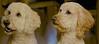 dog-photo-goldendoodle-pet-photography