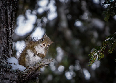 Squirrel-December 19, 2013-4