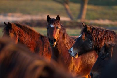 Horses on Esprit-December 03, 2011-29