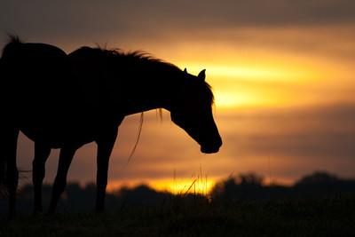 Horses at Sunrise (11 of 18)-screen
