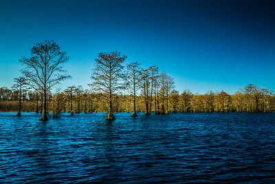 February Swamp