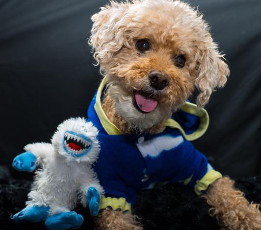 Click for more Pet Portraits