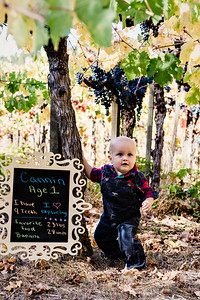 Calistoga Vineyard Baby and Family Portrait