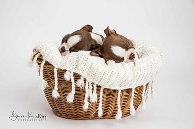 Duke Puppies-1150