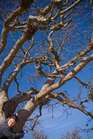 Gayle's Tree