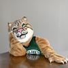 11-21-15 Bobcat  (14)