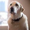 The Sad Dog
