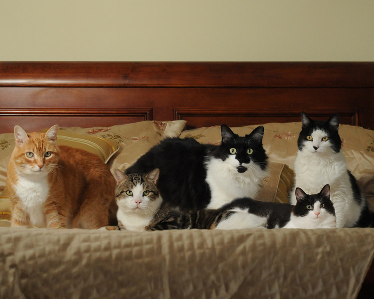 The Cat family poses for a picture<br /> <br /> From left to right:<br /> Tinky, Buddy, Jimmy, Rosey, and Penelope
