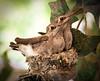 _MG_1551HummingbirdsTake2_rtcrbrum-LRedits_cl2_500med