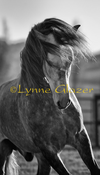 The essential joy of being with horses is that it brings us in contact with the rare elements of grace, beauty, spirit, and fire.<br /> -Sharon Ralls Lemon