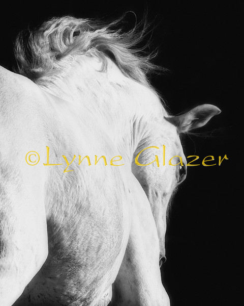 "A horse is a thing of such beauty...none will tire of looking at him as long as he displays himself in his splendor.""<br /> -Xenophon"