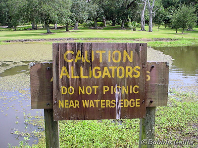 "©Bobbie Gallia: ""Waterside Appetizers""; Warning sign at one of many small alligator infested lakes on grounds of Avery Island Jungle Garden, adjacent to the Tabasco home facility in south Louisiana. Note the gator to the left of the sign!"