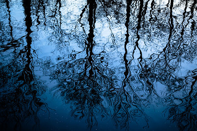 The Mirror World