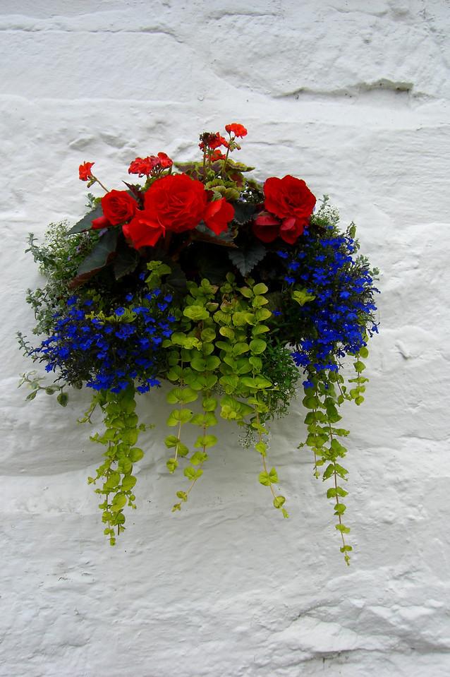 Fresh Wall Flowers, Carcassonne, France