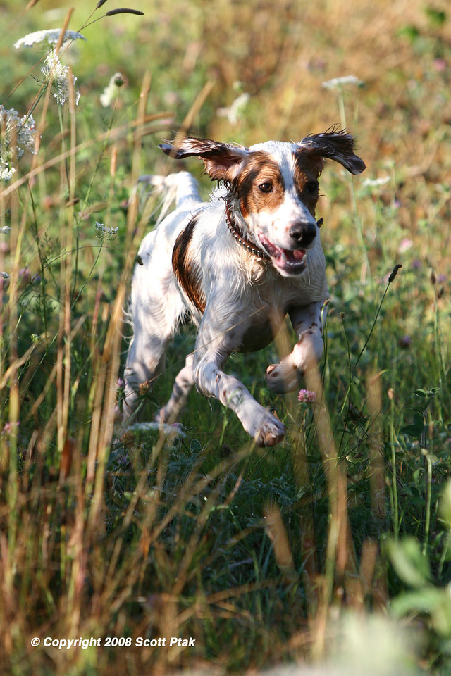 "Born to Run - ""Doc"" the Dog Having a Blast!"