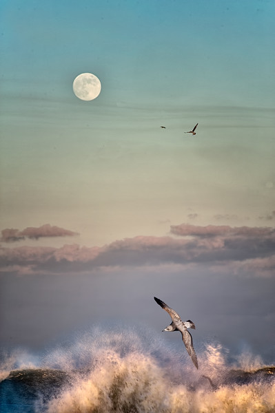 Moonrise over crashing waves and birds, Pompano Beach