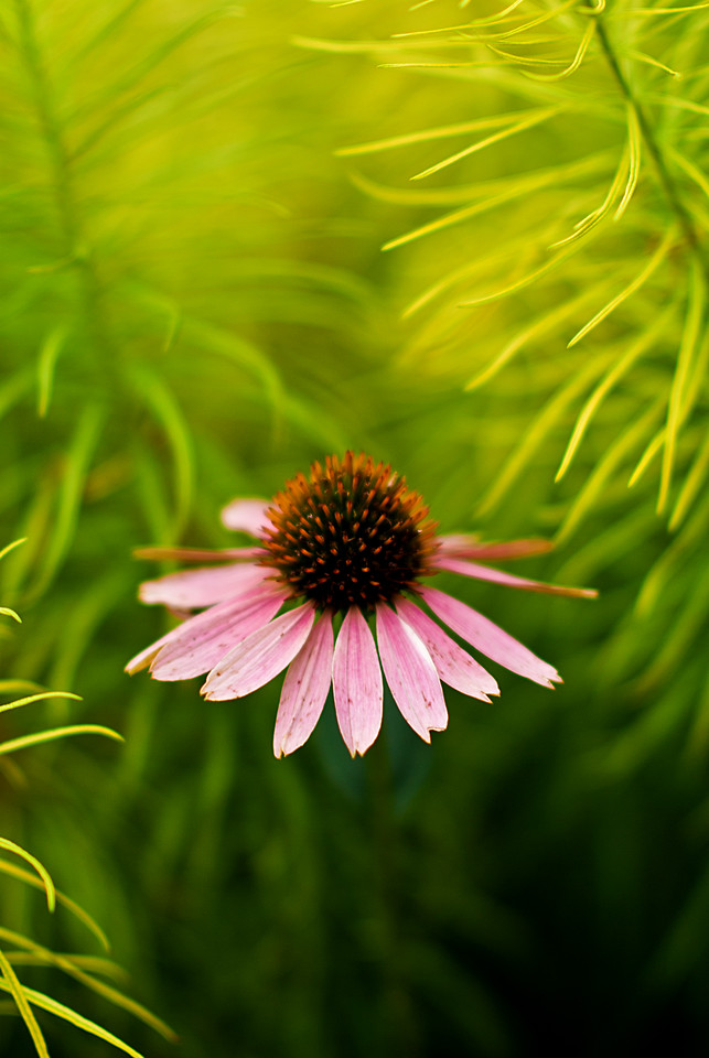 A colorful flower floating in a sea of green.