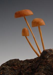 Di Williams - Mushrooms
