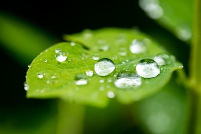 Macro water droplets