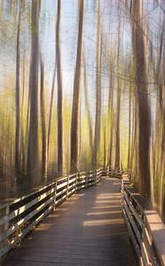 Audubon Corkscrew Swamp Sanctuary Photography