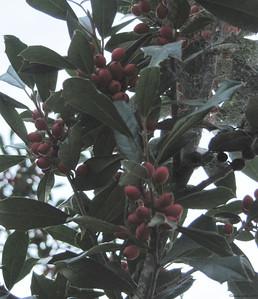 1-25-11- Holly