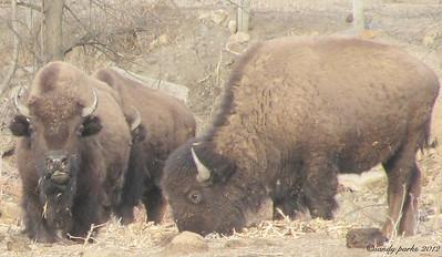 1-16-11- Buffalo