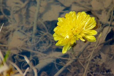 1-29-12- Lost flower