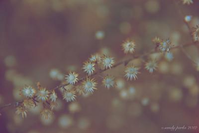 1-14-12- January flowers