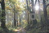 10-16-12- Into the forest, Jarman's Gap Road (1)