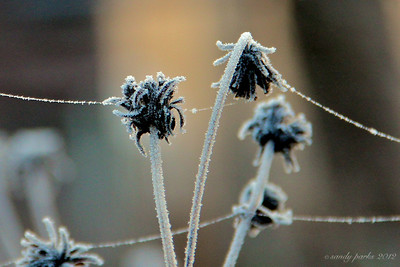 1-10-11- Frost on the cobwebs