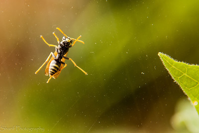 A wasp sits on the window in the morning. Reminds me to wash them every now and then.