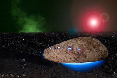 Ever wondered why those abalone shells look so alien? Think again!