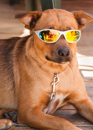 A customer of Aldo's restaurant outfitted his dog with sunglasses.