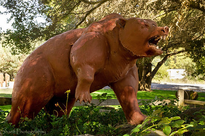 One of two bear statues in a park in Scotts Valley that could use a little TLC.