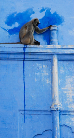 "Taken in Pushkar, Rajasthan, India. For the exhibition, I titled this ""Monkey Pee, Monkey Do""."