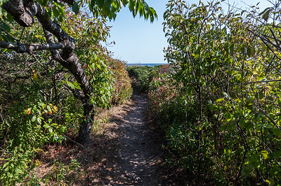 Cliff Walk 7