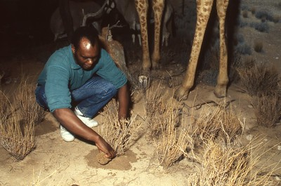 1992_CMNH_African-Wildlife-Hall_016